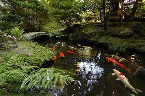 Japanese guest houses houshi ryokan for Koi pool opening times